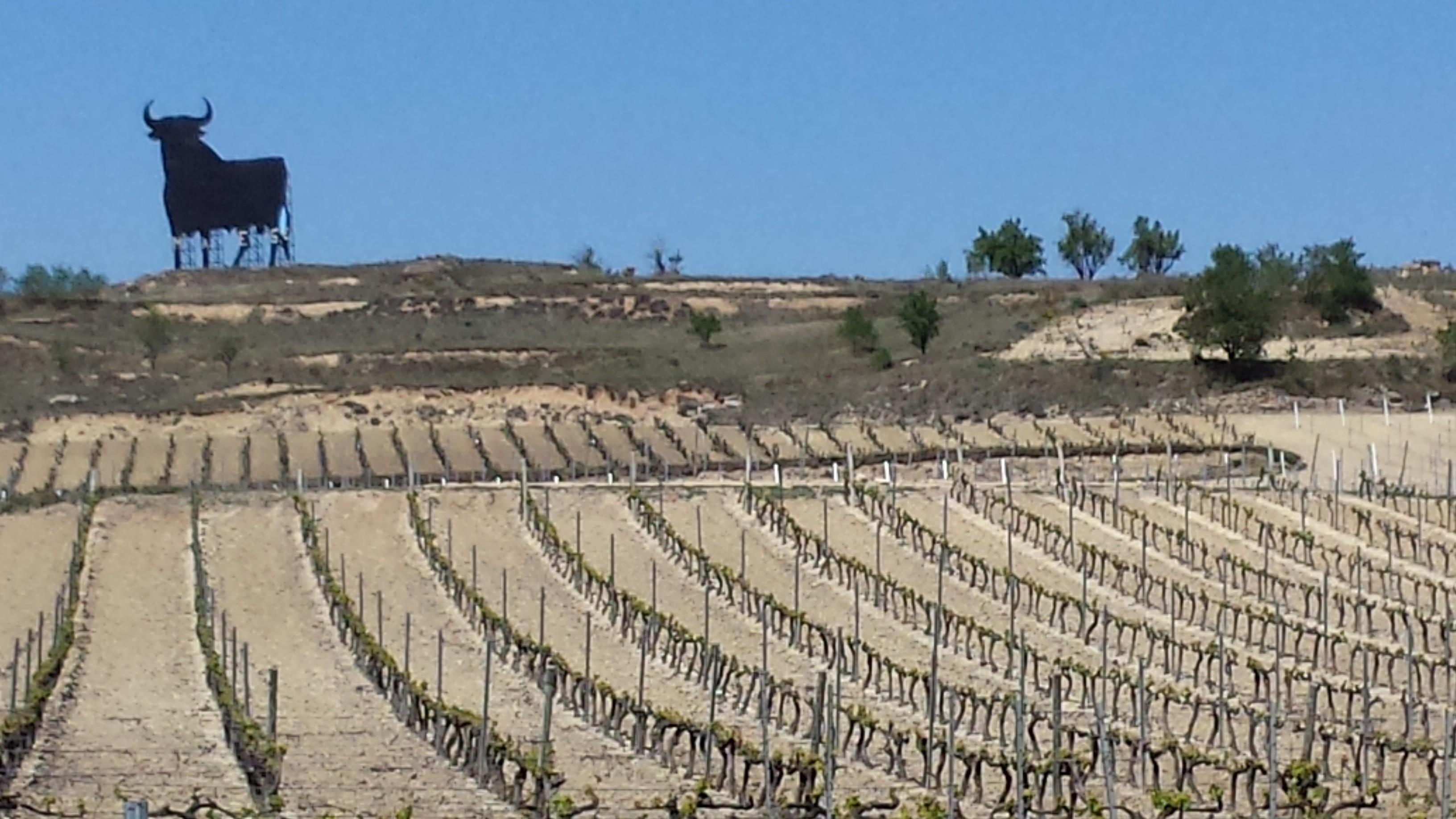 Weinberg-Rioja